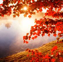 Zmanjšana osteoporoza, manj viroz in drugih težav gospe Milene v jeseni življenja